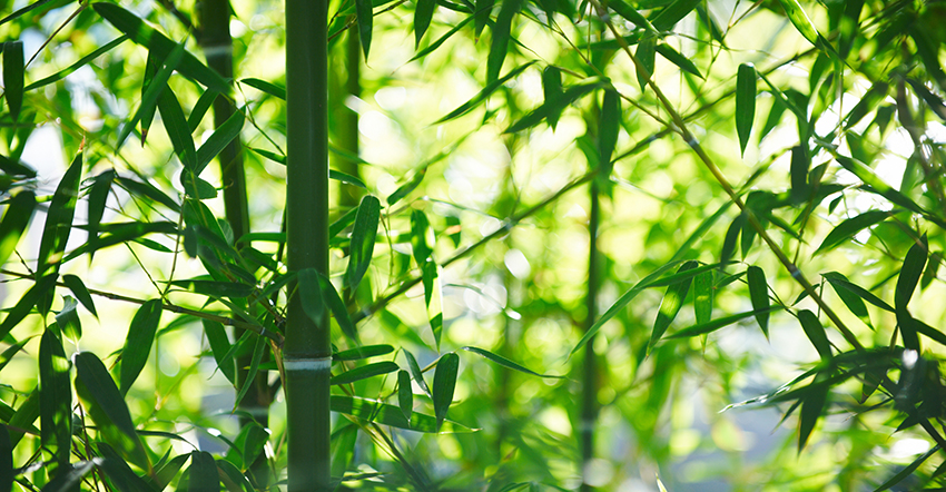 Why Is My Bamboo Turning Yellow? The Primary Reasons?