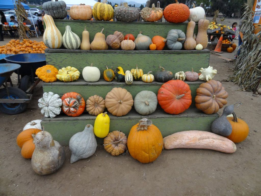 how many types of pumpkins are there