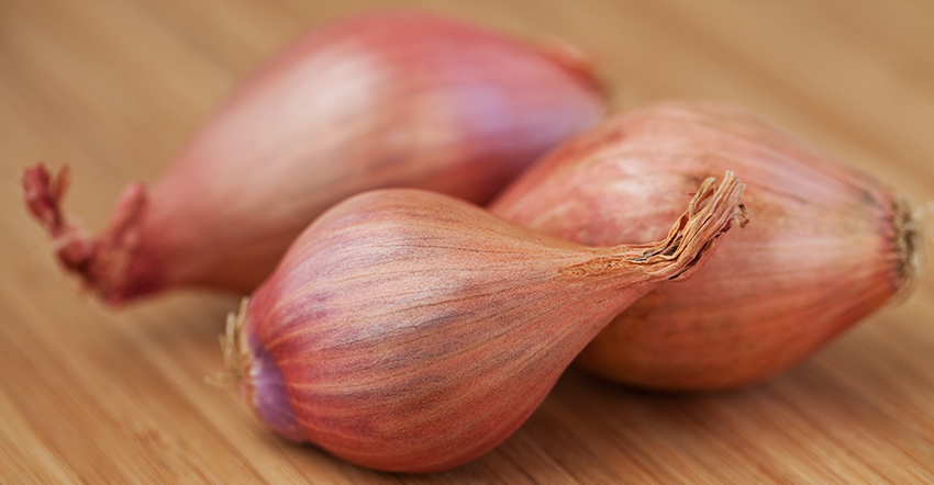 Shallots rich in flavonols and polyphenolic compounds help boost digestion manage diabetes and increase circulation Shallots also help in weight loss