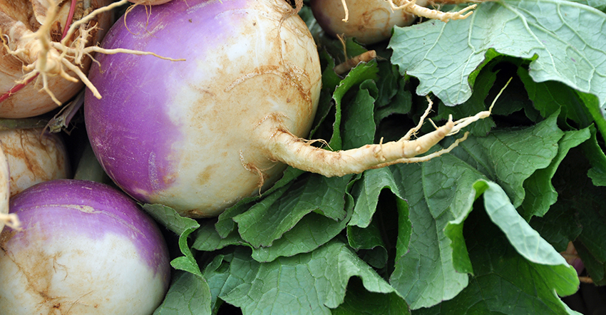 Types of Turnips