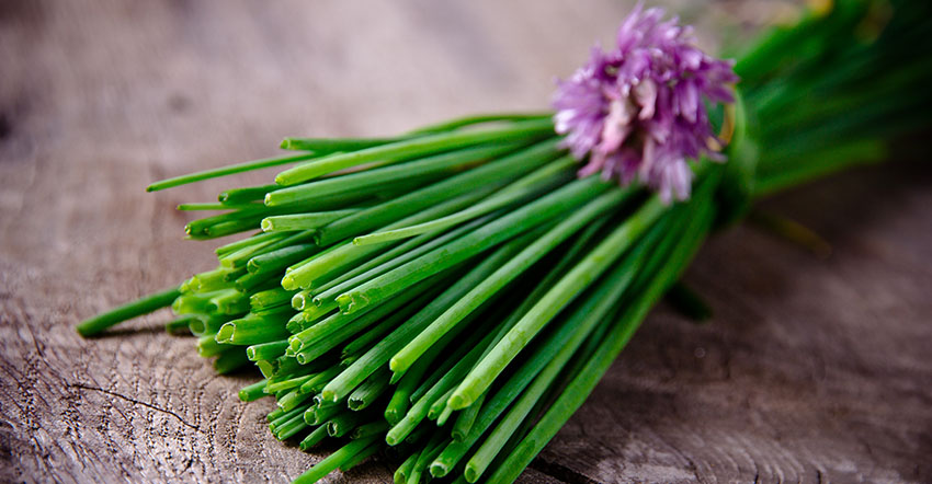 Nutritional Value of Chives