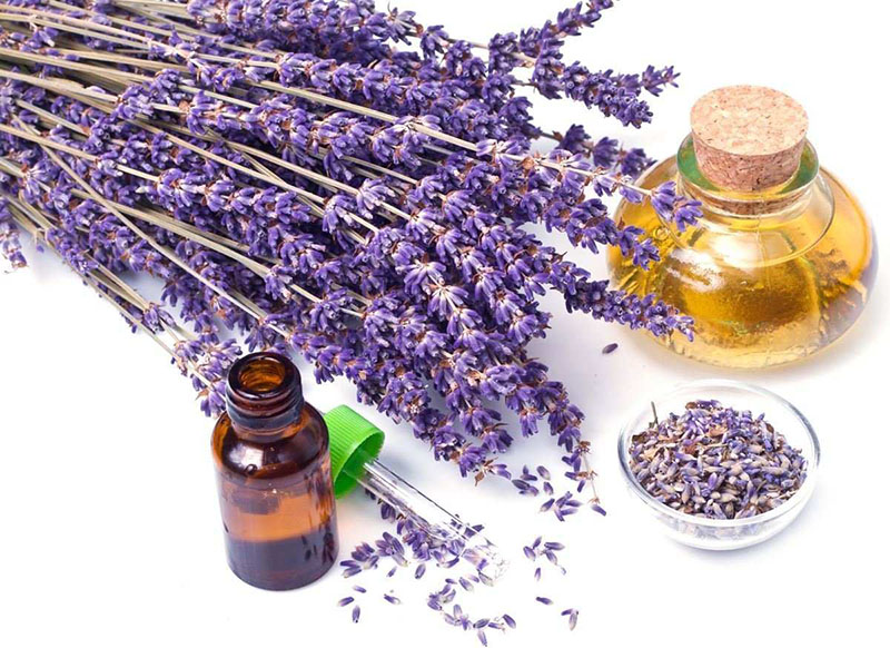 Lavender Improves Sleep