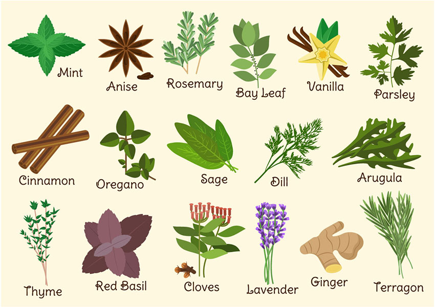 Must-Have Herbs