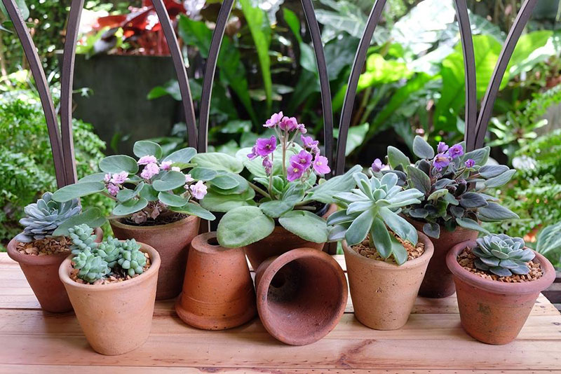 African Violet and Succulent