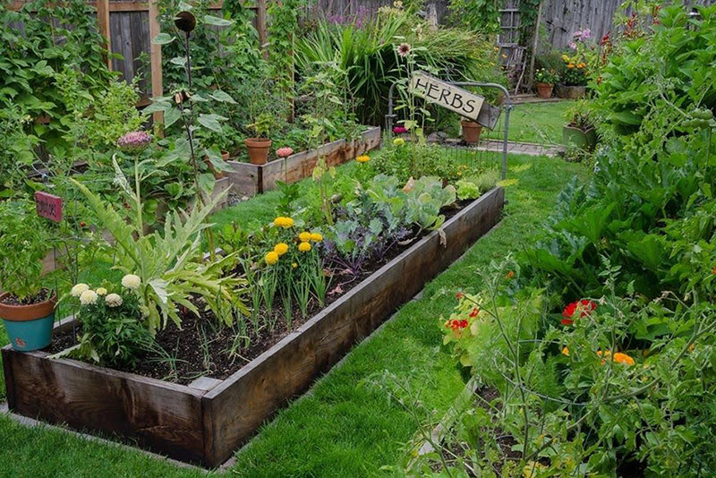 Plant Own Herbs