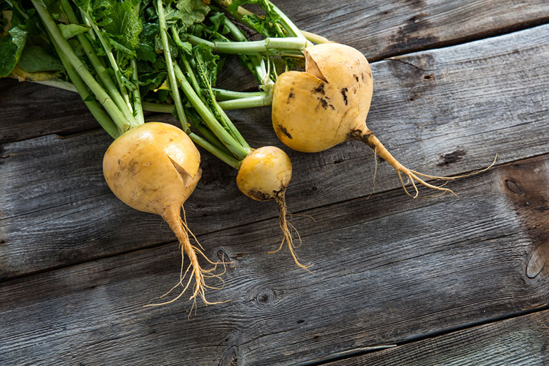 Golden Ball Turnips