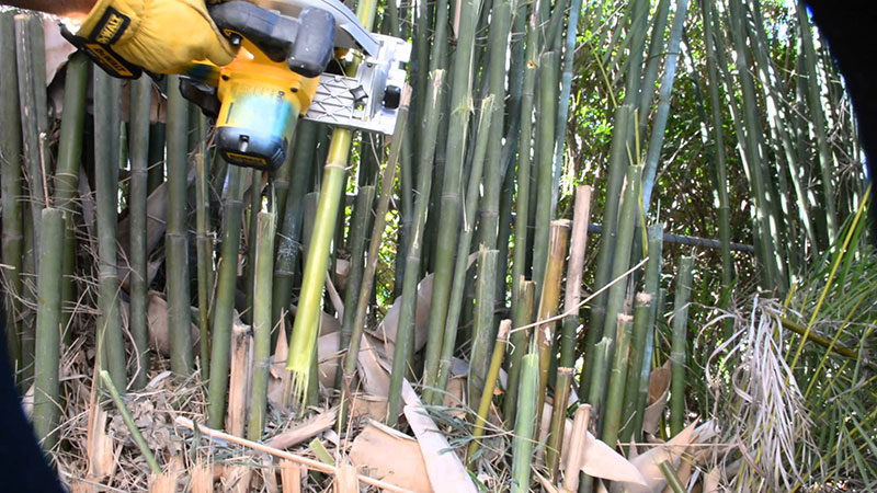 Cutting Bamboo