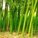 Get Rid of Bamboo