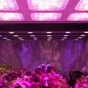 How to Make DIY LED Grow Light