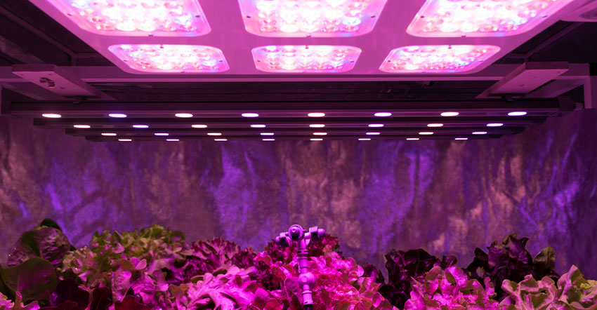 Diy Led Grow Light How To Make One On Your Own