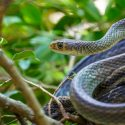 Snake on Branch Tree