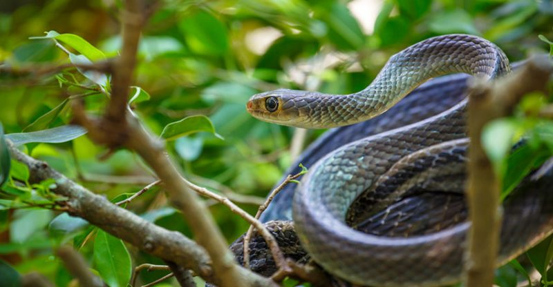 The Best Snake Repellent Reviews in 2018 - Get Snakes Out of Yard