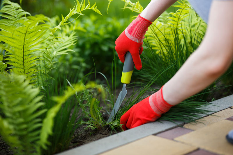 Remove Weeds by Hand